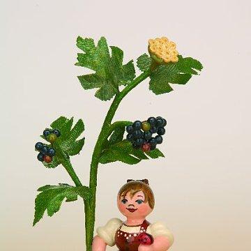 Herbstkind Holunder
